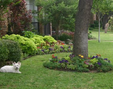 Landscaping Ideas For North Texas PDF